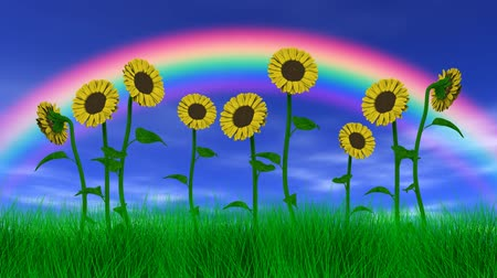 modrá obloha : Sunflowers gently swaying in the breeze with blue sky, clouds and a rainbow. 3D animation, seamless looping animation.-