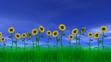 girassóis : Sunflowers gently swaying in the breeze with blue sky, clouds and grass. 3D animation, seamless looping animation.-