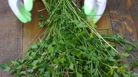 yeşillik : on the wooden table selects green parsley for eating healthy food.