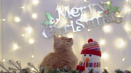 Cute red kitten meykun playing with Christmas balls with a Christmas decoration with a snowman.4k,30fps,2019.