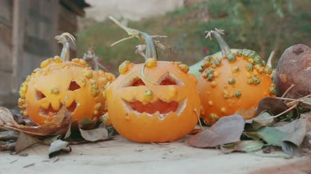 dynia : Halloween pumpkins over a tree trunk with autumn decoration Wideo