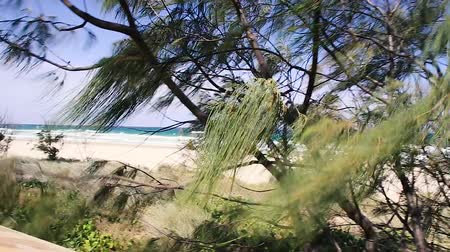 hemisfério : detail of tree branches moving in the wind in front of Gold Coast pristine beach and the Pacific Ocean in Australia