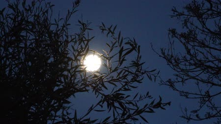 hátborzongató : full moon at night among tree branches, camera panning around the scene