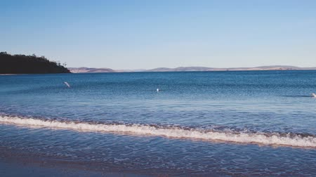 tasmania : pristine deserted Australian beach in Tasmania where the estuary of the river Derwent meets the open ocean Stock Footage