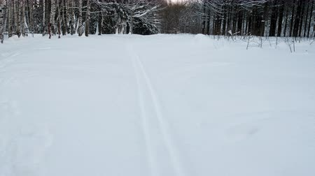 pień : Ski track in winter snow-covered forest.