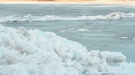 coldness : Birds seagulls on the ice river. Stock Footage
