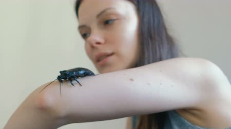 terrarium : Young woman holding a male of Gromphadorhina portentosa the hissing cockroach, one of the largest species of Madagascar cockroach.