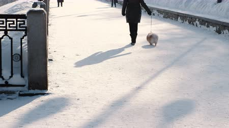 Unrecognizable woman walking with a little dog on a leash in a snow-covered winter Park. Back view.