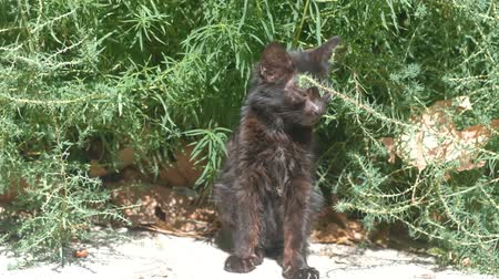 interessado : Homeless black kitten basking in the sun.