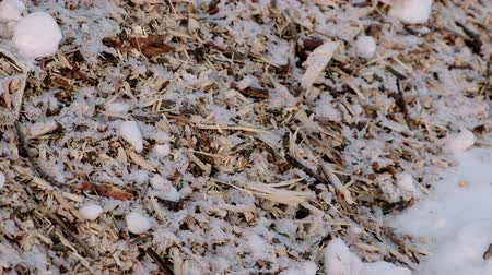 caring : Sawdust and twigs of sawn trees in the snow close-up. Camera moves from botoom to top.