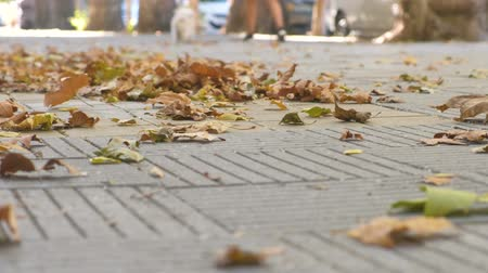 passerby : Yellow colorful beautiful leaves on the sidewalk in the city. Stock Footage