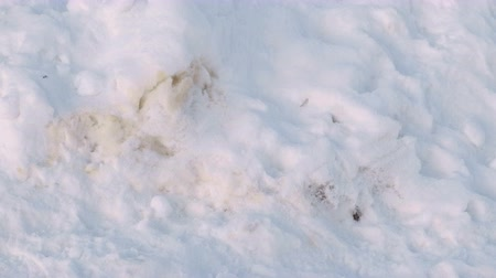 grime : Excrement of Pets in the snow in the winter Park.