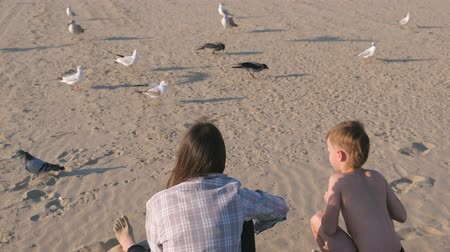 mobbing : Mom and son are feeding birds gulls and crows on a sandy beach with dunes.