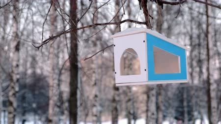 feeder : Wooden bird feeder on the tree in the winter Park. Stock Footage