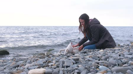 vodní ptáci : Young woman is sitting on the stone beach by the sea with her white dog. Dostupné videozáznamy