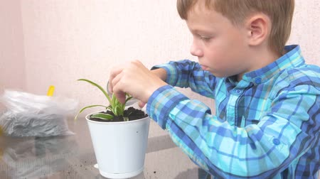 schooler : Plant care concept. Boy is planting houseplant and watering it.