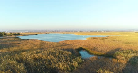 sazlık : Wet meadows, marshes on city background, aerial footage with swans at sunset.