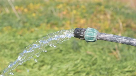 gushing : Clean water pours from the hose well outside on the grass background.