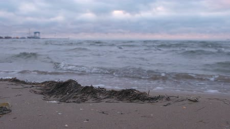 algler : Kamka seaweed on the beach at sunset. Seascape with sea port. Stok Video