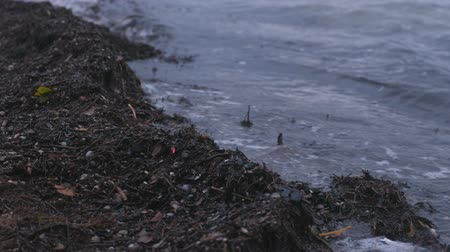 common salt : Kamka seaweed on the sand beach at sunset. Stock Footage
