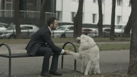 small park : Businessman and his dog playing in the city park siting on bench Stock Footage