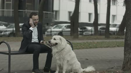 diferansiyel odak : Business man with dog talking by phone Stok Video