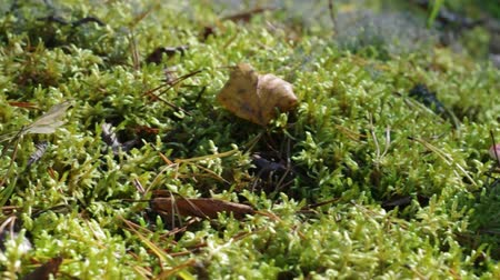 üvez ağacı : Wild Mushroom close up