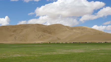 gobi : Sands Mongol Els, Herd of animals grazed on the grass Stock Footage
