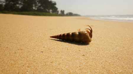 Hermit crab on a beach in sea Wideo