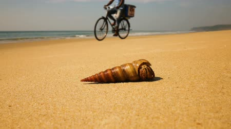 hermit crab : Hermit crab on a beach in sea Stock Footage