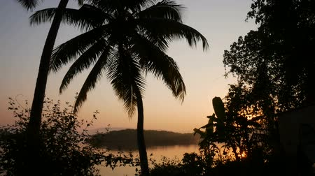 Tropical jungle background with palm tree silhouettes at sunrise
