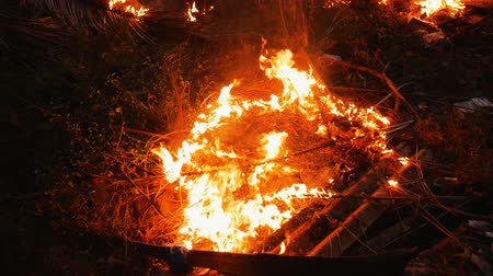 neobdělávaný : Fire in the jungle forest