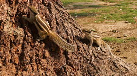 knaagdier : Squirrel have fun near the tree