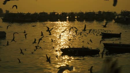 samut : Fishing boat on the sea at sunset. Birds seagulls are flying on the sea.