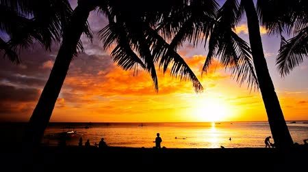 сумерки : Tropical beach at sunset