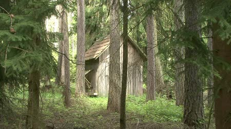 hayloft : hayloft for forest animals Stock Footage