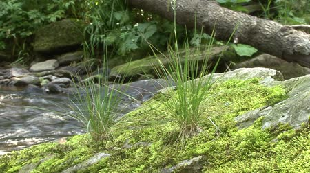 Moss with grass on a large stone on the water