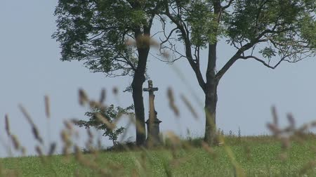 headstone : Tombstone trees Stock Footage