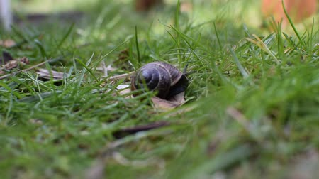 squirm : Slug close-up in grass