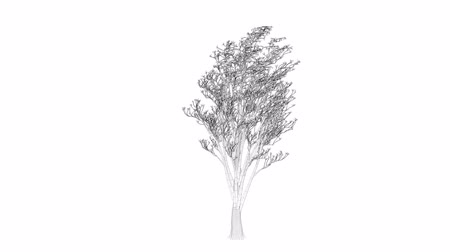 polygone : 3d rendering of a loop tree animation as wireframe isolated Stock Footage
