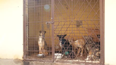 hajléktalan : dogs locked in the cage