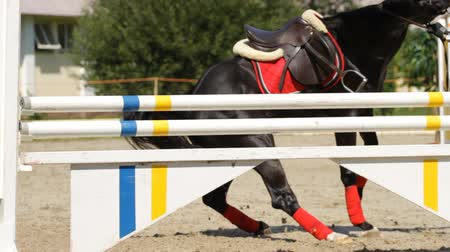 lovak : equestrian show jumping