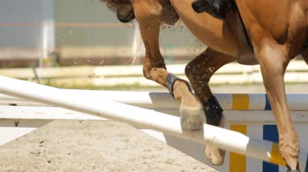 horse racing : equestrian show jumping