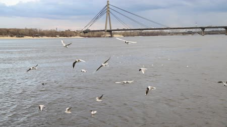 arch bridges : Gulls on by the river Dnepr and  Moscow bridge in Kyiv, Ukraine . Stock Footage