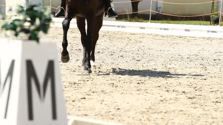 terbiye : Horse Dressage Rings and rider