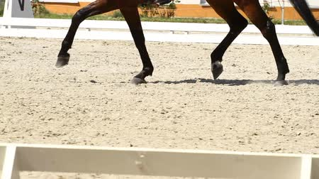 terbiye : Dressage horse and a rider Stok Video