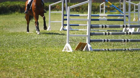 horse racing : Horse jumping a hurdle in competition Stock Footage
