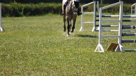 horse racing : Slow motion.Horse jumping a hurdle in competition