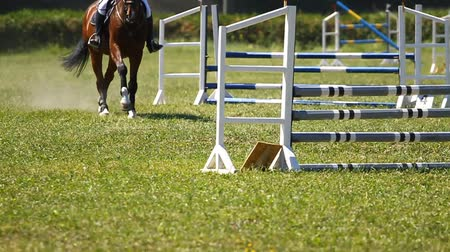 horse racing : Slow motion.Horse jumping on a hurdle. Stock Footage