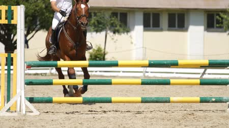 horse racing : Horse jumping on a hurdle.Slow motion.